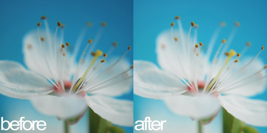 appleblossom-beforeafter